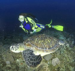 model and turtle on the move!using 16 mm fisheye to get u... by Fiona Ayerst 